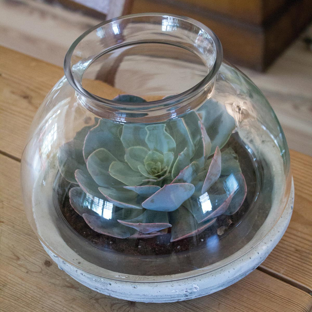6 Things No One Tells You About Repotting Succulents 46 Spruce Wholesale Supply House
