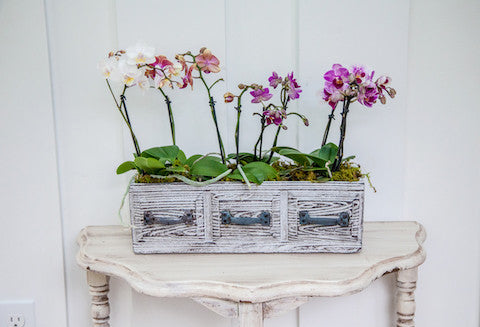vintage drawer trio planter