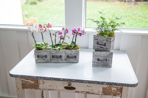 vintage drawer planter