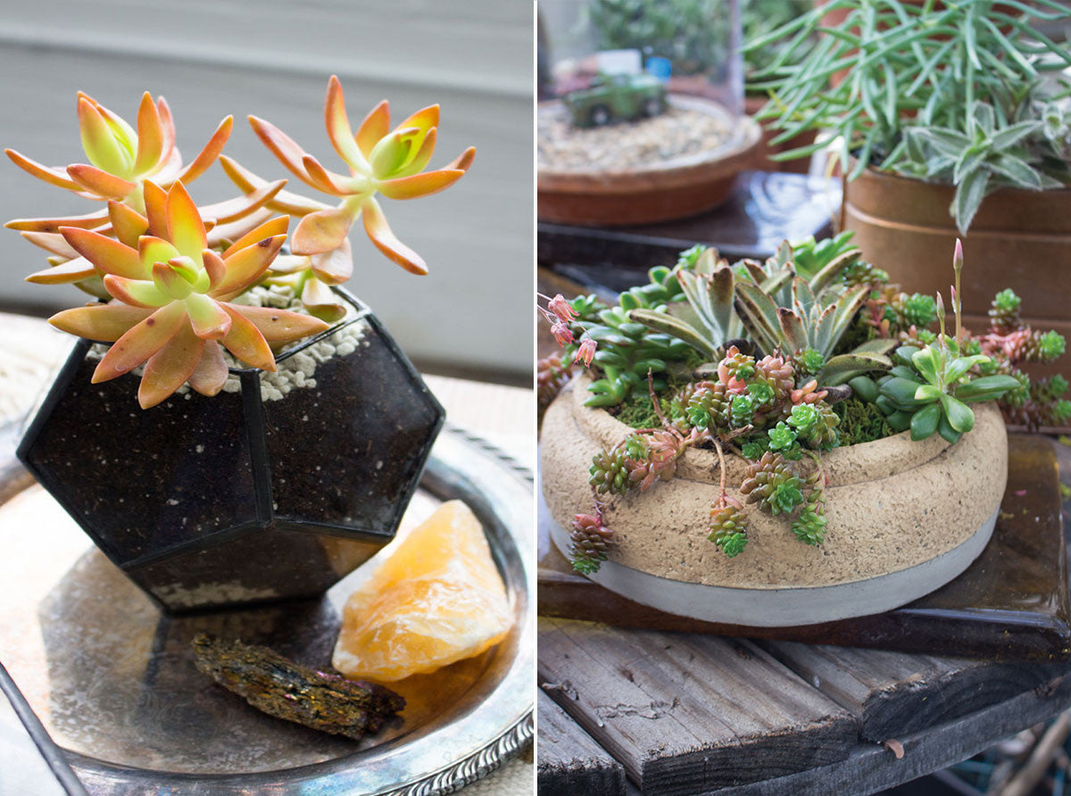 plant succulents in planters