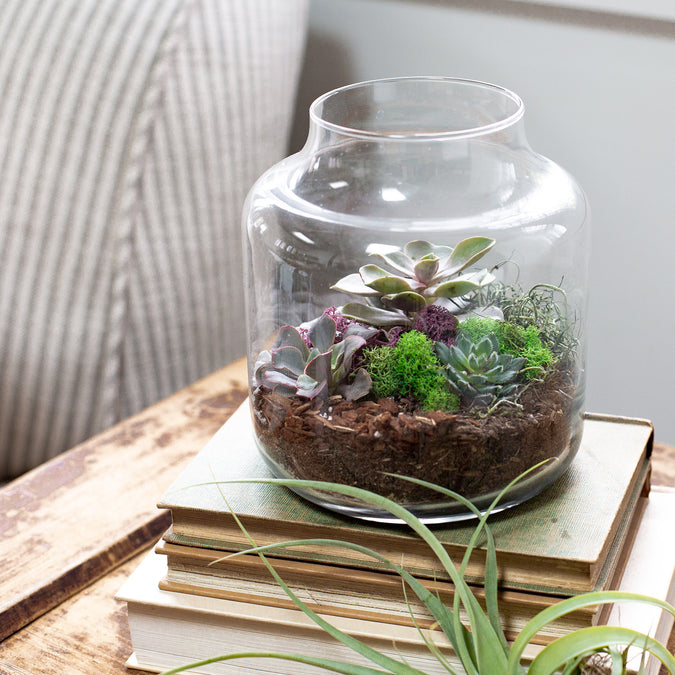 Terrarium Workshop Kit for 12 with Free Shipping