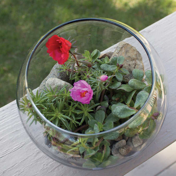 top view of large bubble ball terrarium with flowers and plants