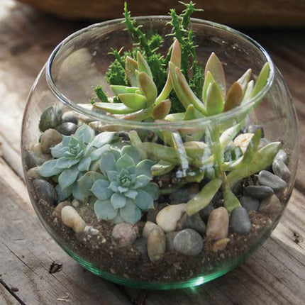 small bubble ball in use as a terrarium