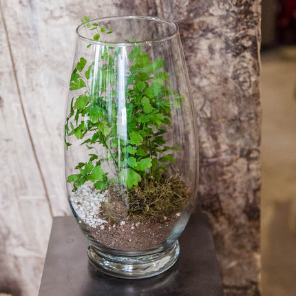 celebrity vase in use as a terrarium with plant moss and stones