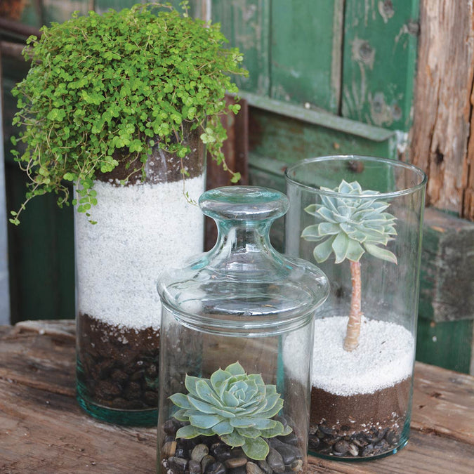 small medium and large recycled glass cylinder vases with plants and succulents on display outside