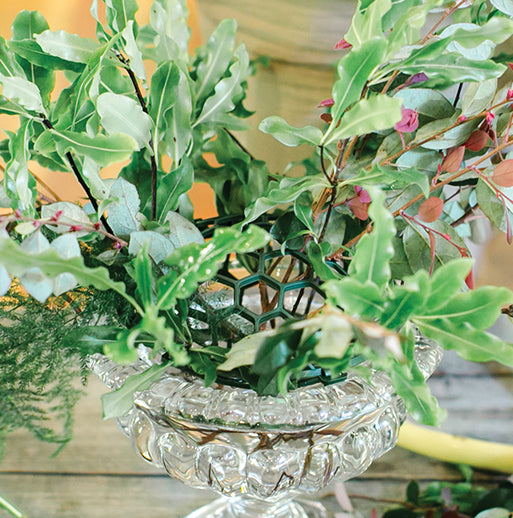 Holly Chapple Abelia Compote