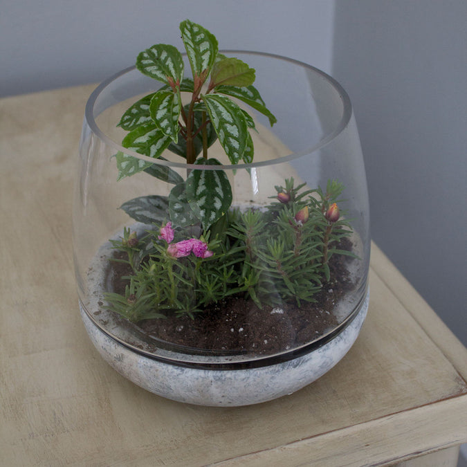 mixed material terrarium filled with plants on a wooden side table
