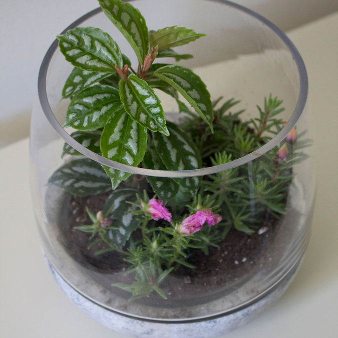 overhead view of mixed material terrarium filled with plants