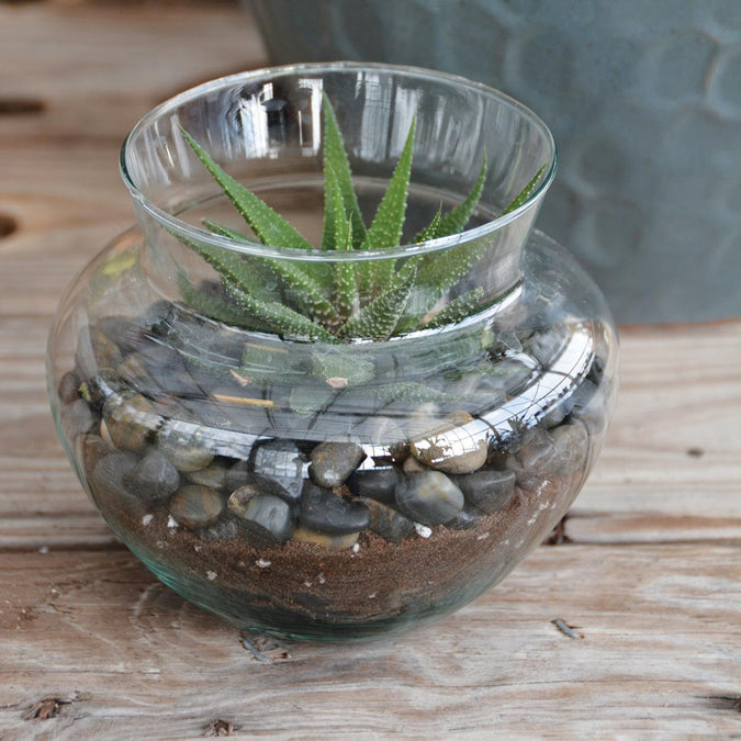 small peony vase used as a terrarium with a succulent and stones