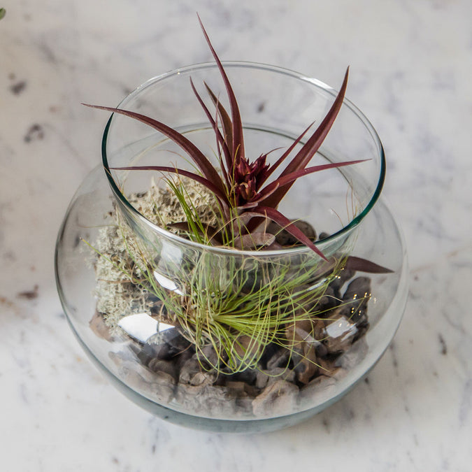 small peony vase used as terrarium with airplant
