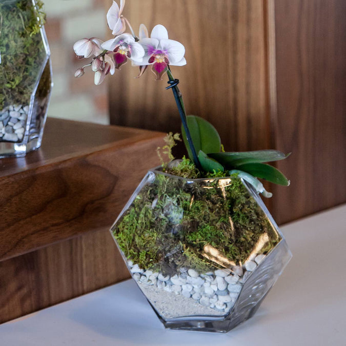 prism bowl used as a planter with orchid moss and stones