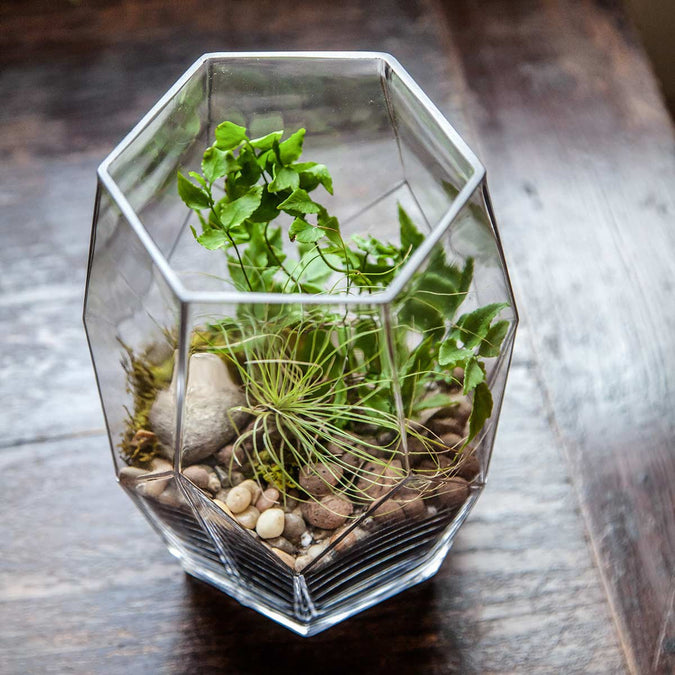 overhead view of large prism vase used as a terrarium