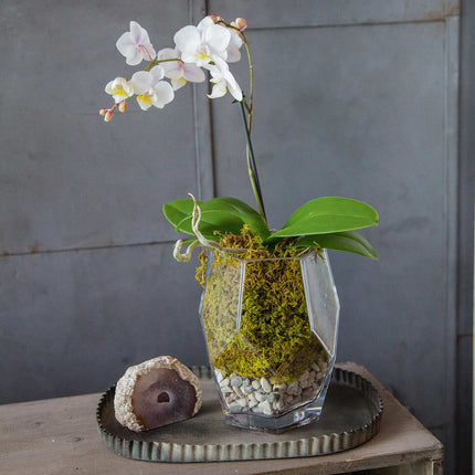 small prism vase used as planter with orchid moss and stones