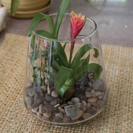 pyramid vase used a terrarium with stones and a bromeliad