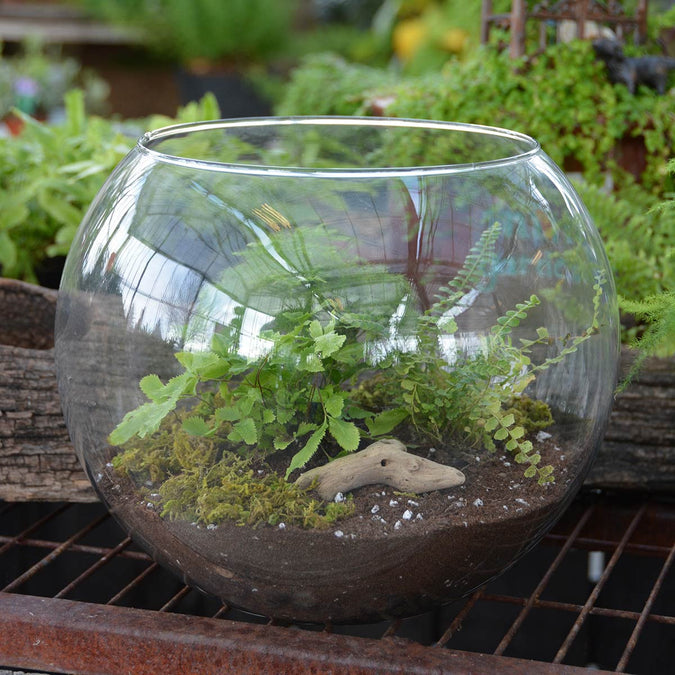 rose bowl terrarium filled with plants soil moss and driftwood