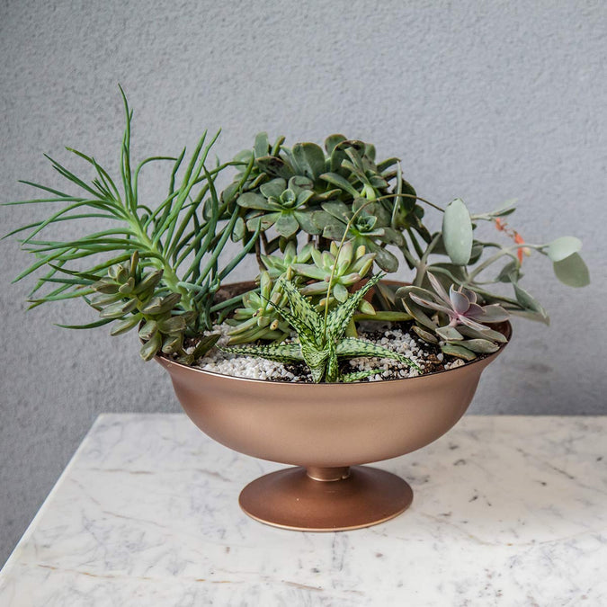 rose gold footed bowl filled with succulents and plants on a marble surface