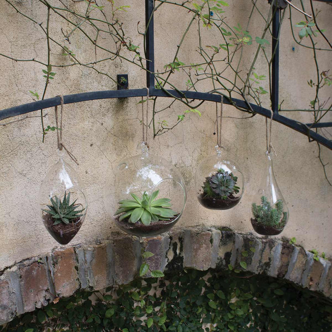 large and medium hanging terrariums filled with succulents hanging outside next to diamond and teardrop hanging terrariums
