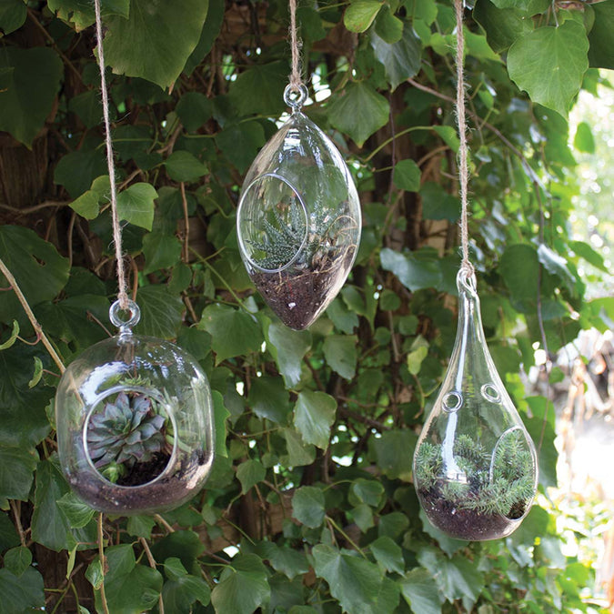 round hanging terrarium diamond hanging terrarium small teardrop hanging terrarium hanging outside