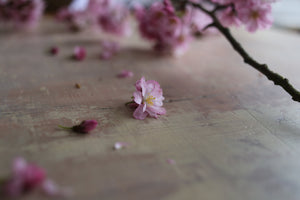 'Hanami' Hand-painted Photography Background Board - Pinks, Creams, Burnt Umber-Background Board-Tom-60x60cm-Woodrow Studios Food Photography Background