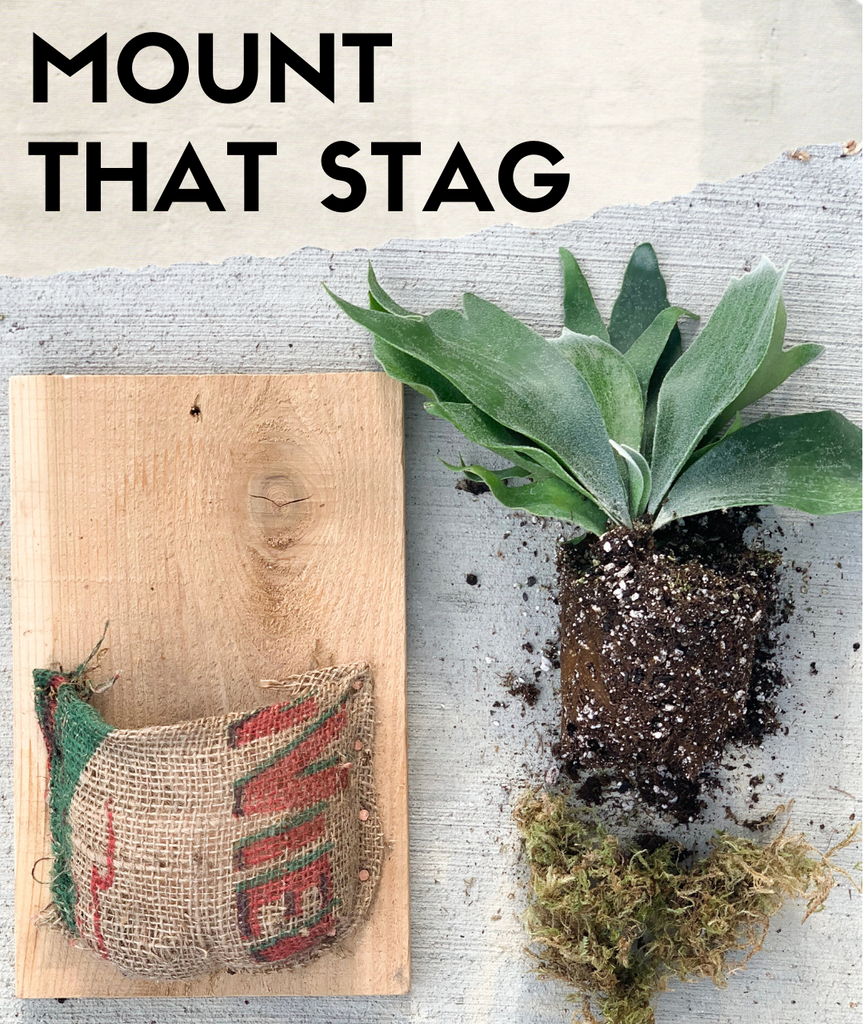 "En Tu Casa: ""Mount That Stag"" Workshop"