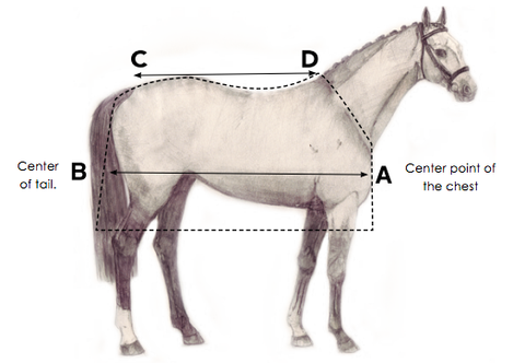 Measuring for a Horse Blanket