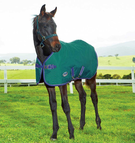 Weatherbeeta Foal Turnout Blanket