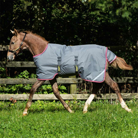 Amigo Foal Blanket in Excalibur