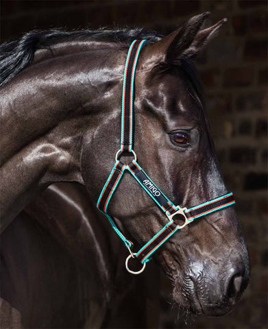 Amigo Padded Nylon Halter in Black with Teal
