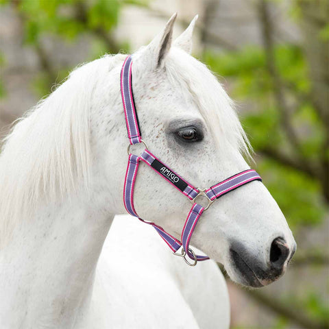 Amigo Pony Padded Halter in Grape