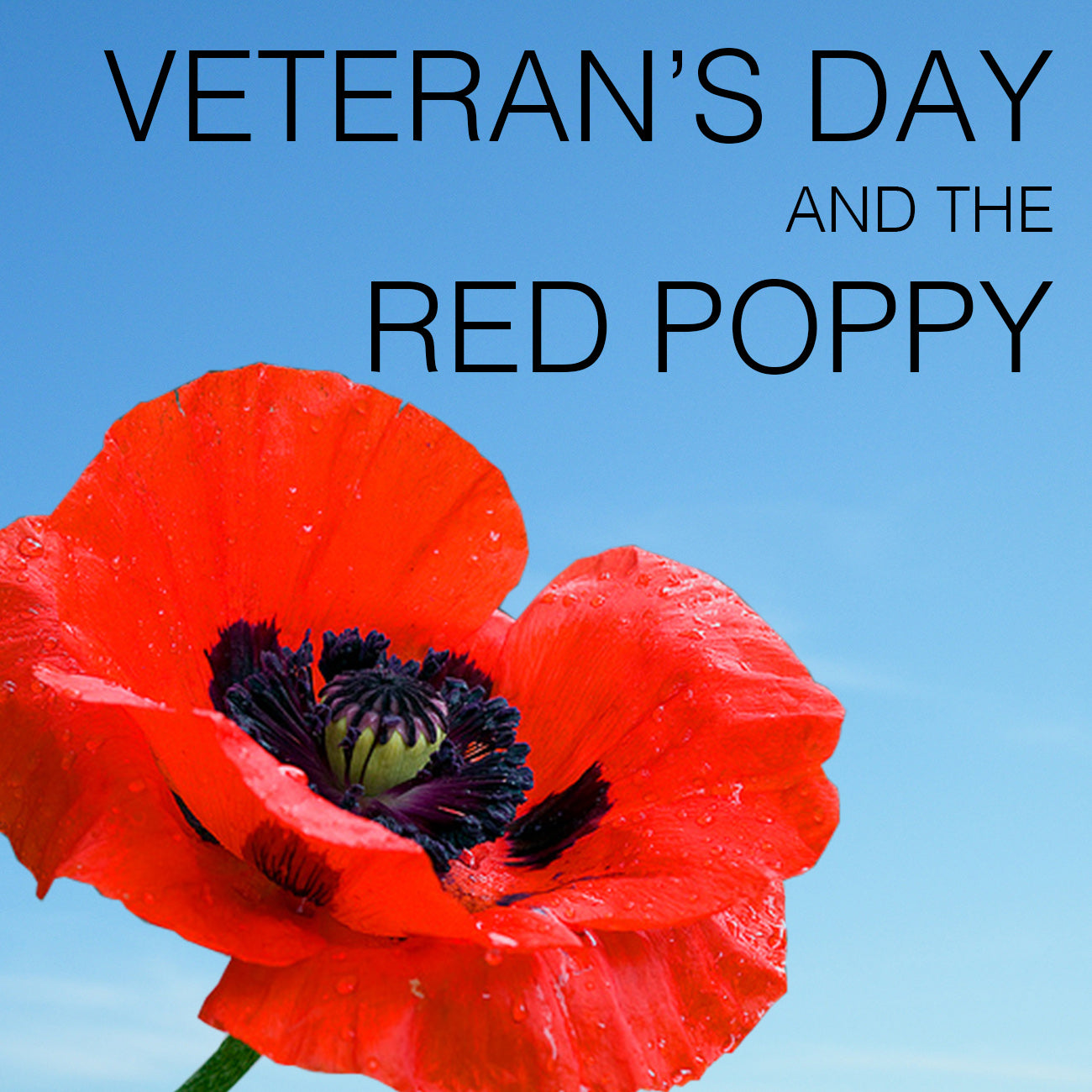 Veteran S Day The Red Poppy The Walking Cradle Company