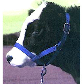 Turnout Cow Halter - Blue (30DC BL) - Peazz Pet