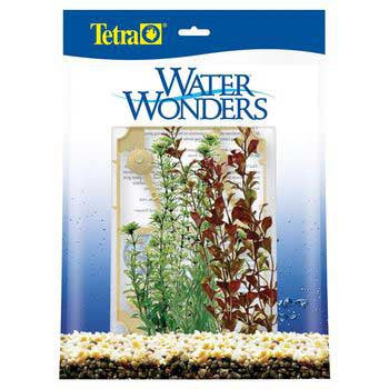 Water Wonders Southeast Asia Lake Plant Assortment - Peazz Pet