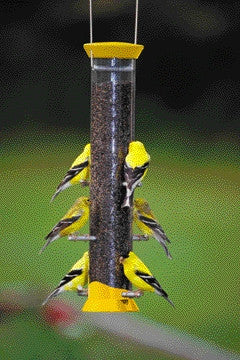 New Generation Thistle Feeder Yellow 15 Inch (Cjthm15Y) - Peazz Pet