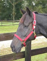 "Nylon Adjustable Horse Halter with Chin Strap 1"" - Large Red (1DAS LGRD) - Peazz Pet"