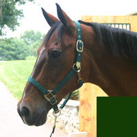 "Nylon Adjustable Horse Halter with Chin Strap 1"" - Large Hunter Green (1DAS LGDG) - Peazz Pet"