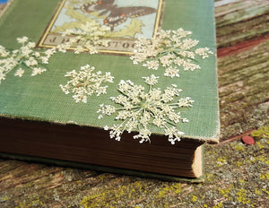 Pressed Queen Anne's Lace - Size Medium