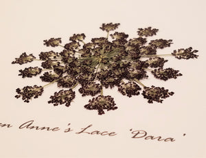 Pressed 'Dara' Queen Anne's Lace - Size Medium
