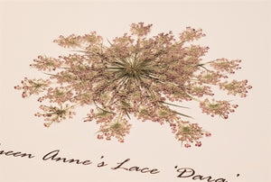 Pressed 'Dara' Queen Anne's Lace - Size Extra Large