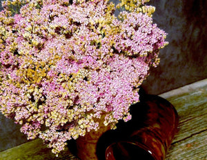 Five Petal Farm Dried Pink Yarrow