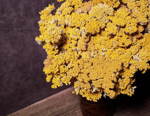 Five Petal Farm Dried Yellow Yarrow
