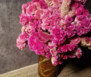 Five Petal Farm Dried Pink Celosia, Dried Pink Cockscomb