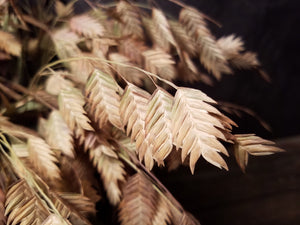 Dried Sea Oats, Dried Oats, Dried Grass