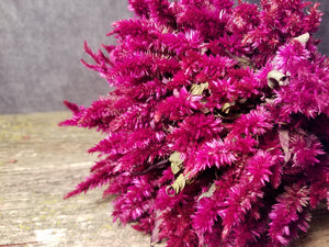 Dried Celosia, Ruby Parfait