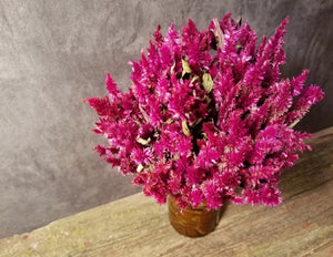 Five Petal Farm Dried Ruby Parfait Celosia