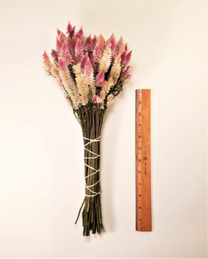 Dried Celosia, Flamingo Feather
