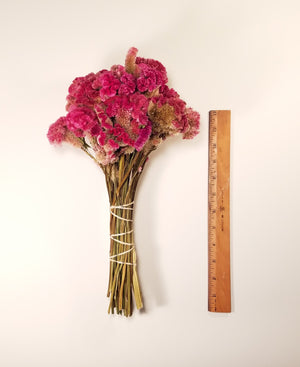 Dried Rose Celosia, Dried Cockscomb