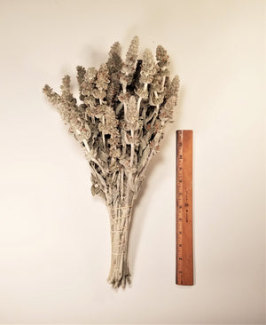 Dried Lamb's Ear Stalks
