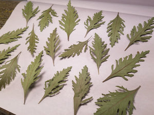 Pressed Russian Sage Leaf