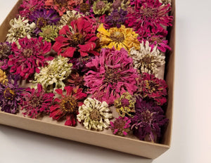 Five Petal Farm Whole Dried Zinnia Flowers