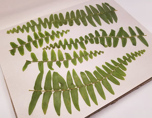 Pressed Boston Fern